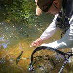 ombre pêche à la mouche Auvergne