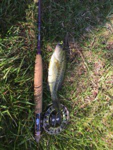 Guide de pêche à la mouche, Black bass à la mouche