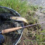 Stage de pêche à la mouche en Auvergne